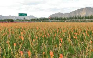 农村产业融合发展中藏药高效种植建设项目可行性研究报告